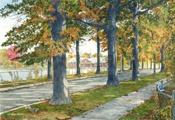 View of Buttonwood Park in New Bedford MA in the summer with tree lined walkways. Link to Arthur Moniz Gallery Buttonwood Park Prints Gallery 11